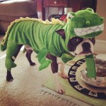 PET HALLOWEEN COSTUMES, COSTUMES FOR DOGS AND PUPPIES, DINOSAUR COSTUME, Boston Terrier in a Dinosaur Costume