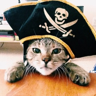 PET HALLOWEEN COSTUME, COSTUMES FOR CATS AND KITTENS, PIRATE COSTUME, Cat in a pirate costume