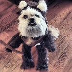 PET HALLOWEEN COSTUMES, DOGS AND PUPPIES IN COSTUME, STAR WARS COSTUME, EWOK, Dog in an Ewok costume