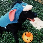 PET HALLOWEEN COSTUME, DOGS AND PUPPIES IN COSTUME, EEYORE COSTUME, WINNIE THE POOH HALLOWEEN COSTUME, dog dressed as eeyore for halloween.
