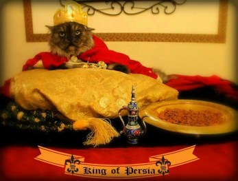 Bobo as the King of Purr-sia!
