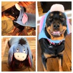 Rottweiler Dog as Eeyore from Winnie the Pooh