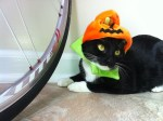 black and white cat at halloween, wearing pumpkin hat halloween pet costume