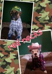 boxers dogs cowgirl and cowgirl pet halloween costumes