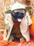yoda star wars halloween pet costume