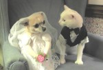 Pippy and Casper as bride and groom