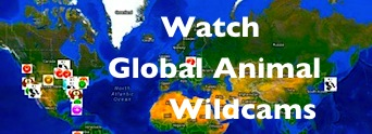WIldcams live cameras of animal kingdom