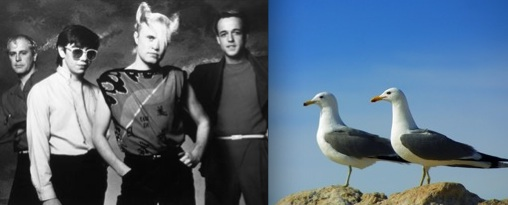 New Wave rock band A Flock of Seagulls (on left) and two seagulls (on right). Photo Credit: Allmusic.com & Dreamstime