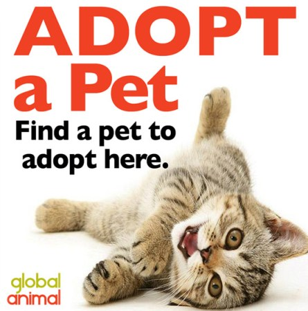 adopt a pet cat kitten banner logo