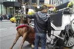 horse pinned under carriage accident in new york city