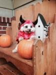 baby dressed in dog devil costume