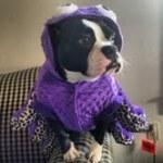 dog in octopus halloween pet costume