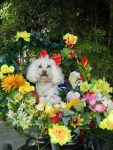 snow white and seven dwarves dog halloween costume