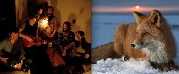 Seattle rock band Fleet Foxes (on left) and a wild fox (on right). Photo Credit: Dallas Observer & animaltheory.blogspot.com