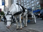 An animal rights group devoted to abolishing the horse carriage industry in New York City declared victory. Photo Credit: flickr