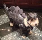 dog wearing dinosaur halloween pet costume