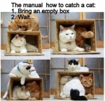 how to catch a cat with empty box