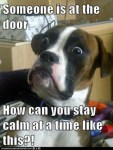 funny dog meme, someone is at the door