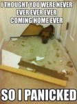 funny panicked dog meme