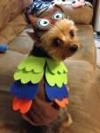 dog in owl halloween costume