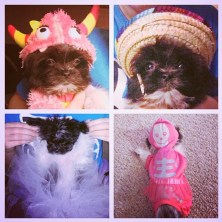 Luna in her many fabulous Halloween costumes!