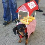 PET HALLOWEEN COSTUME, COSTUMES FOR DOGS AND PUPPIES, HOT DOG COSTUME, Dachshund dressed up as a Hot Dog Vender