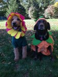 dogs in flower and pumpkin halloween pet costumes