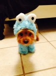 dog in blue cookie monster halloween costume