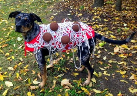 "Raleigh, the ""Monster Meatball,"" in his homemade Spaghetti & Meatballs Halloween costume!"