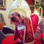 PET HALLOWEEN COSTUMES, COSTUMES FOR DOGS AND PUPPIES, THE POPE, A Yorkie Terrier in a Pope Costume for Halloween