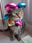 cat jester costume