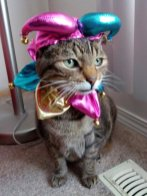 This handsome 15-year-old cat is the court jester!