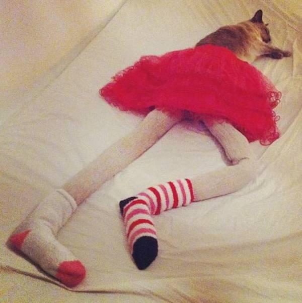 Blue socks? Check. Blue undies? Check. Cat nap? Check. Photo credit: dailylife.com.au
