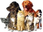 Dogs & Cats