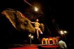 elephants, circus, circus elephants, rambo circus, animal abuse, animal cruelty, circus animals