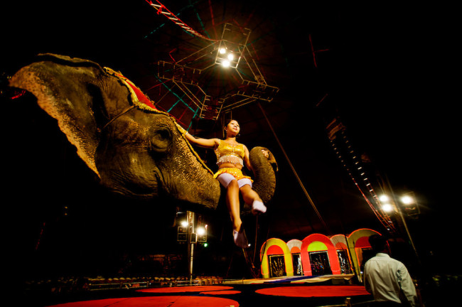 elephants, ankuses, circus, circus abuse, animal abuse