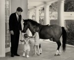 Kennedy-Macaroni-pony