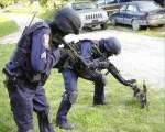 Police Shooting Dogs