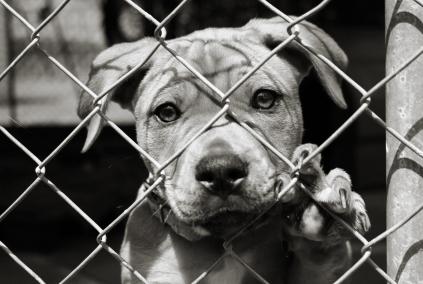 dogs, animal testing, pets, animal cruelty, animal abuse, science, humane society