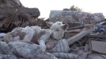 Miley, dog rescued in pile of trash