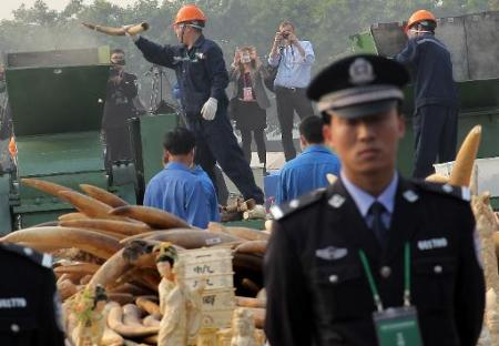 Police man stands watch as ivory is destroyed in the background. Photo: AFP