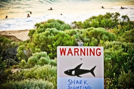 A shark warning is displayed near Gracetown, Western Australia, in November where a man was killed by a shark near the area, sparking a catch-and-kill order. Now through the Surf Life Saving Western Australia Twitter feed tweets will go out when a tagged shark is about half a mile away from a beach./Photo credit: Rebecca Le May/EPA/Landov