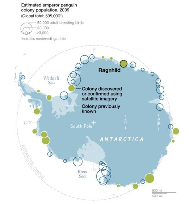 penguins, antarctica, satellite images, penguin colonies, science