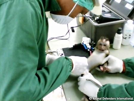 Photo Credit: Animal Defenders International