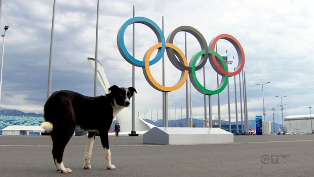 The Sochi government is reportedly having thousands of stray dogs and cats killed to clean up the city for the upcoming Winter Olympics /Photo credit: Peter Akman, CTV News