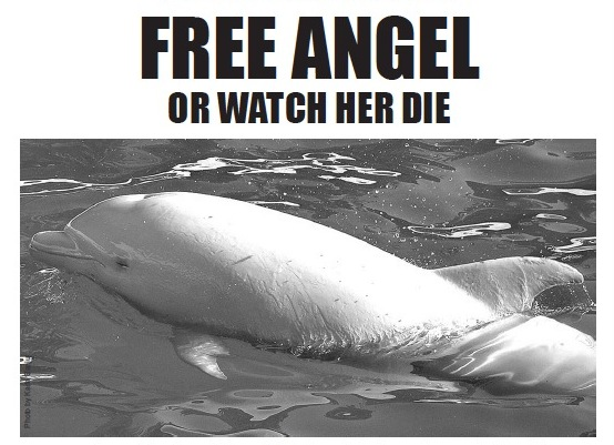 albino dolphin, dolphin, dolphins, the cove movie, taiji, japan, animal abuse, animal cruelty, endangered animals