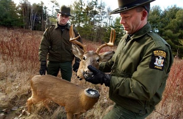 (WILDLIFE/ANIMAL WELFARE) Robotic deer decoys are used to stem poachers.