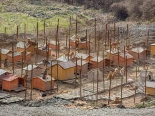 Sochi, WInter Olympics, Stray Dogs, Shelters