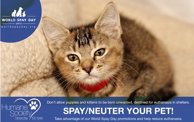 Spaying and neutering will help save the lives of thousands of animals. Photo Credit: humanesocietytampa.org