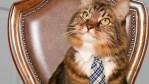 Hank the cat, Cats, Maine coons, politics, Virginia, US Senate